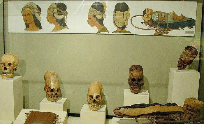 craneos-museo-regional-ica-1