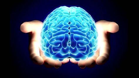 cerebro.jpg_1572130063
